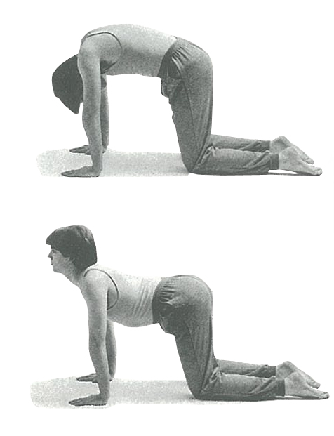 exercises to combat lower back pain